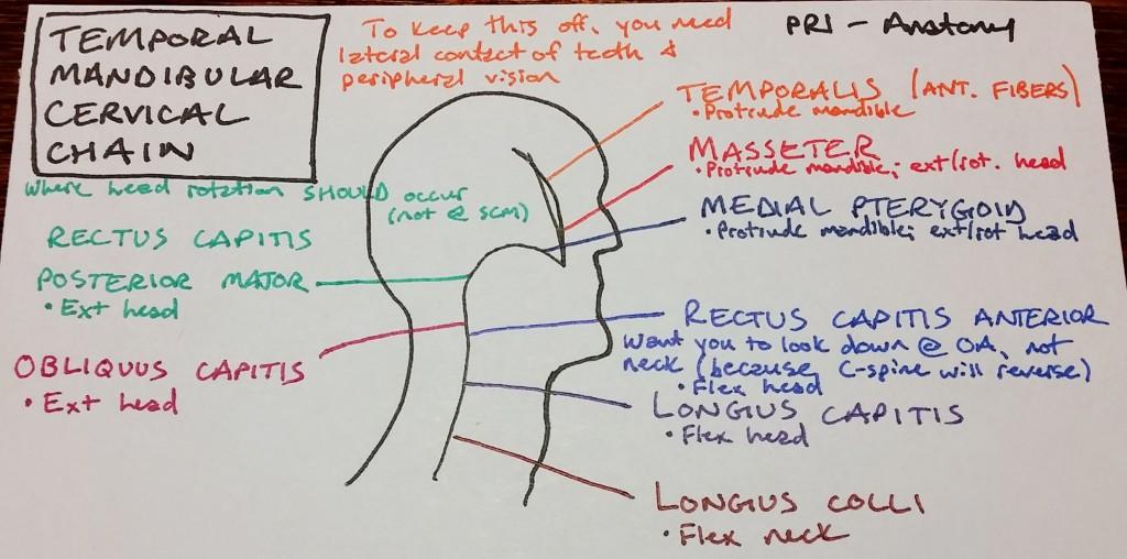 Temporal Mandibular Cervical Chain